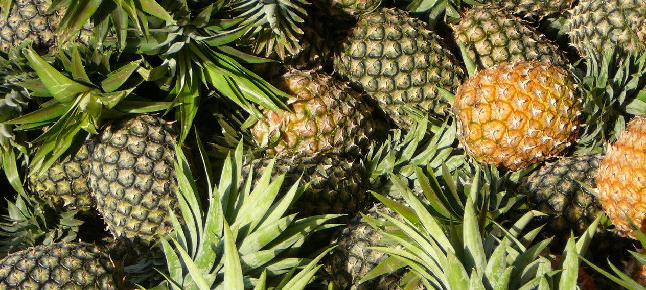 pineapples_colombia_hero.jpg__1264x568_q85_crop_subsampling-2.jpg