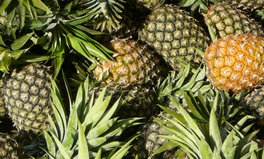 Article: How one pineapple farm in Colombia could be a model for peace