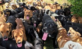 Article: This stray dog paradise in Costa Rica is the ultimate zoo