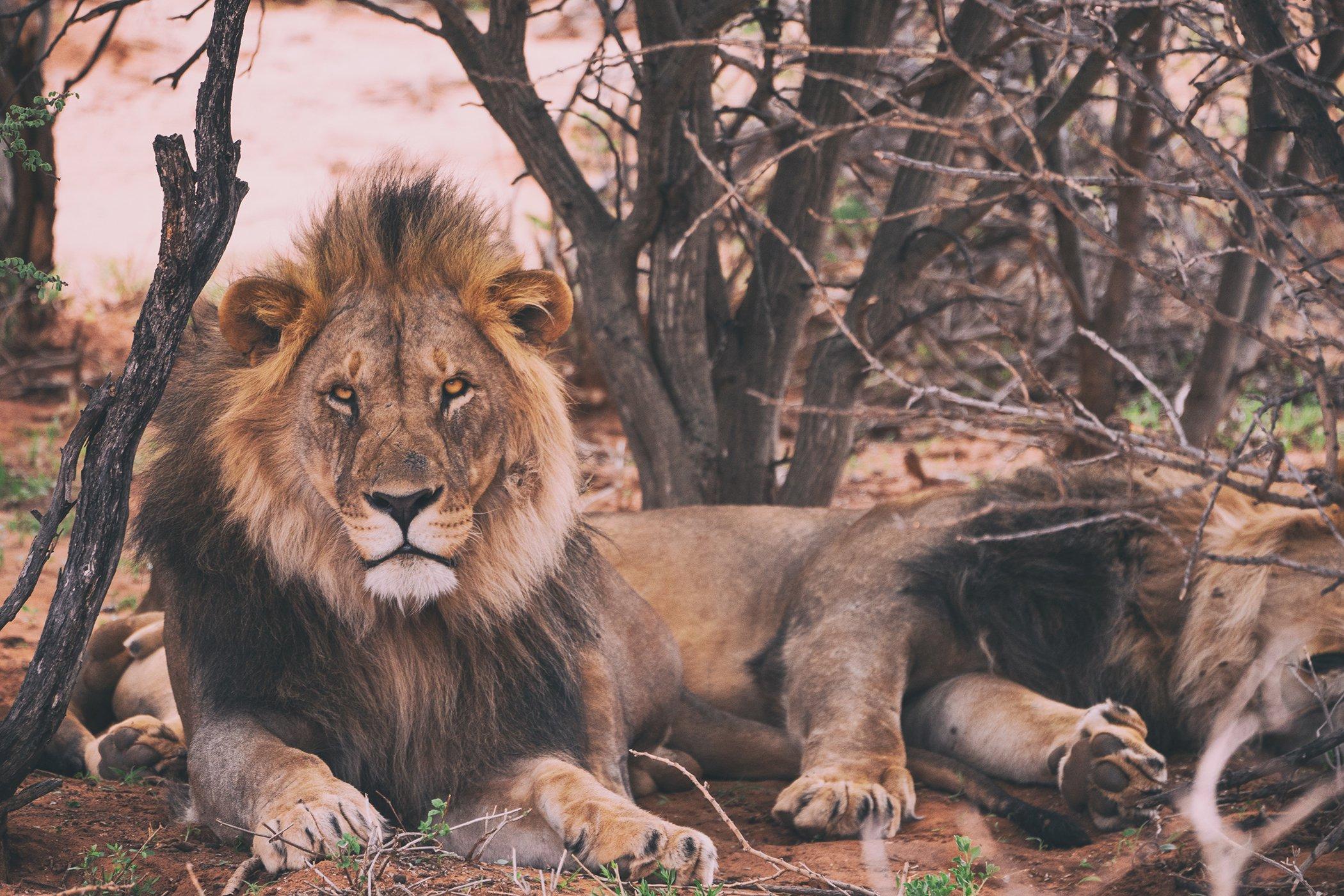 World-Wildlife-Day-Big-Cats-3.jpg
