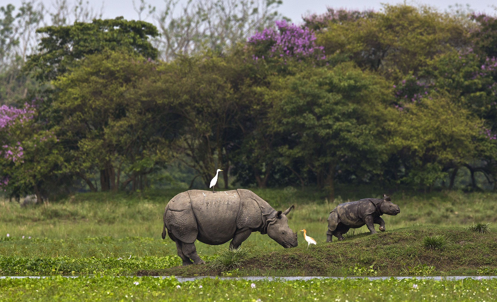 Rhino-India-Conservation.jpg