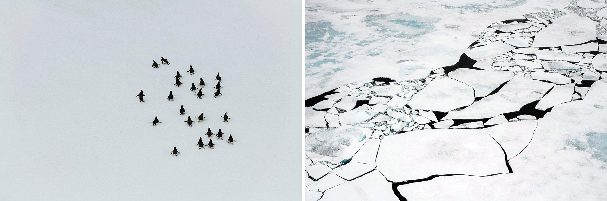 Antarctica_Greenpeace_Diptych.jpg
