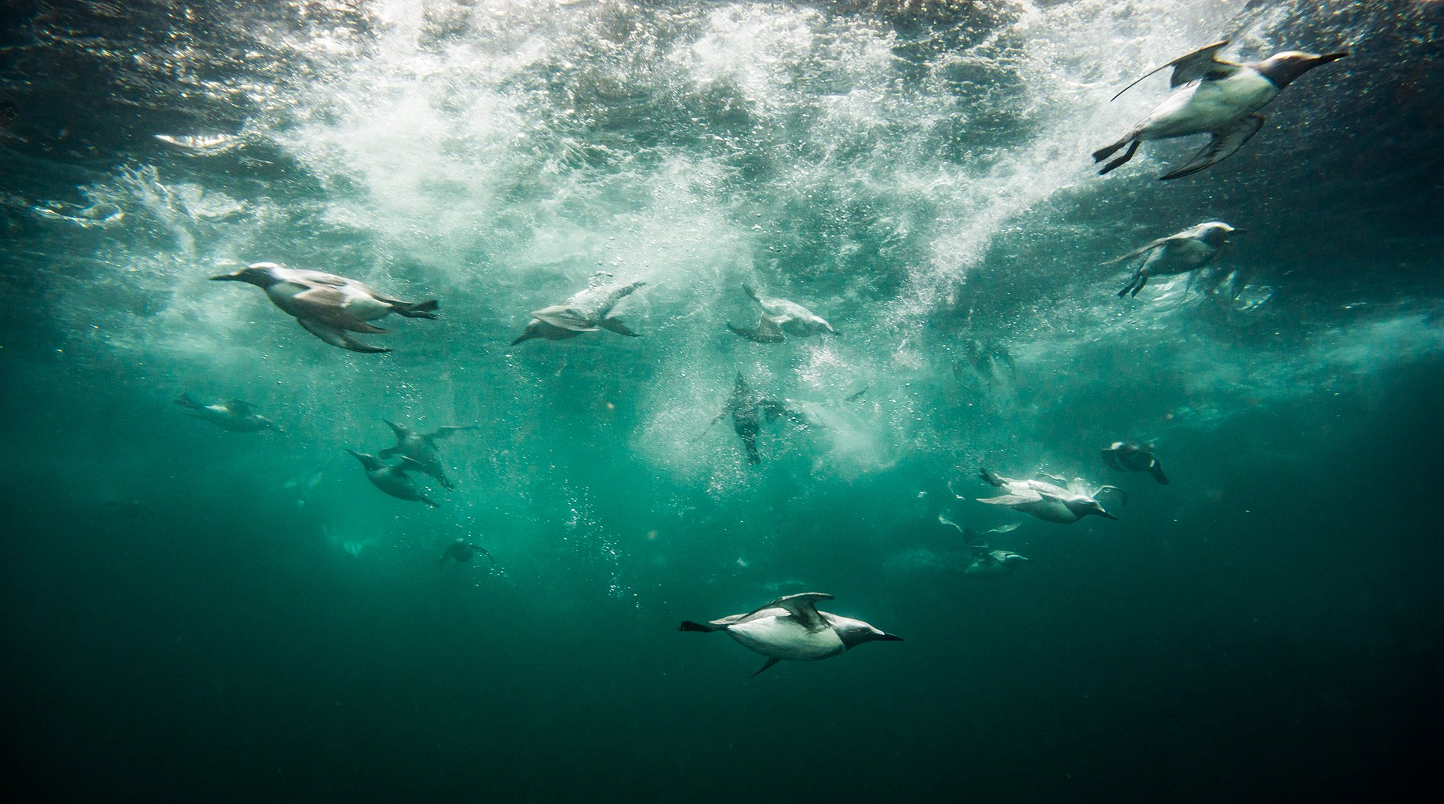 UnderwaterPhotographerOfTheYear_910RobertCuss_013.jpg