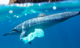 Article: There Are Fewer Plastic Bags on Seafloors Because of New Laws: Report