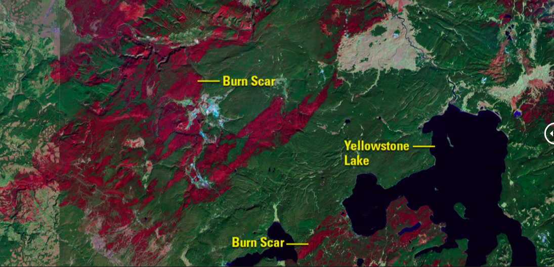 Fire Damage in Yellowstone National Park