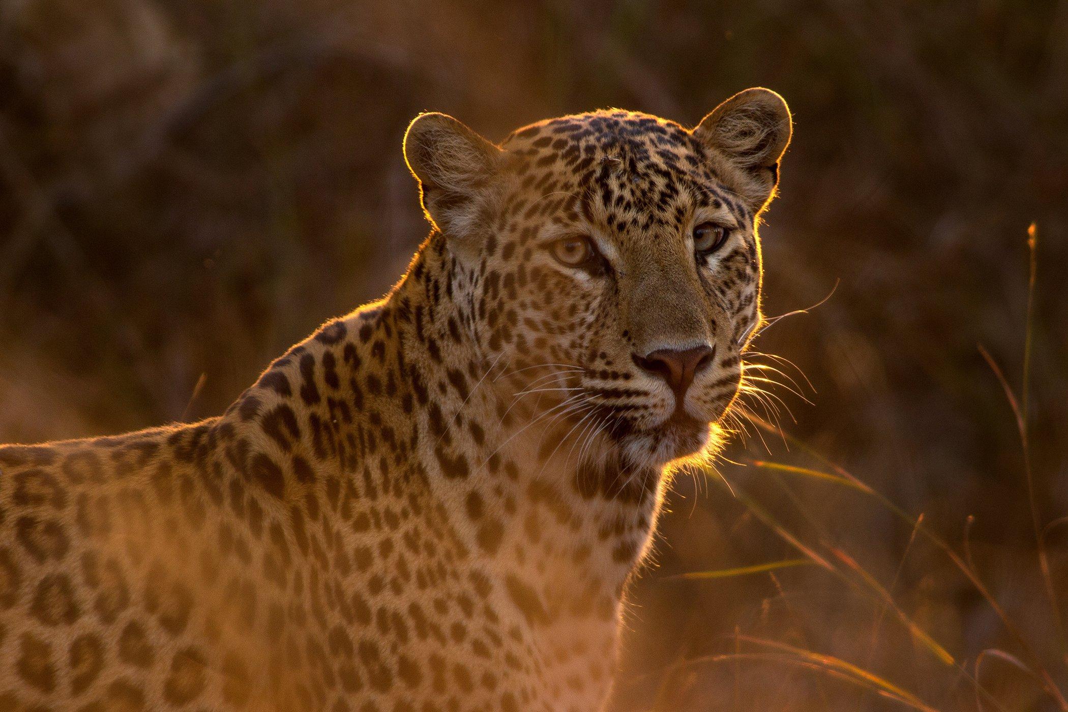 World-Wildlife-Day-Big-Cats-5.jpg