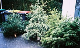 Article: 7 Ways to Recycle Your Christmas Tree and Help the Planet