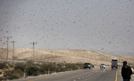 Article: New Tool Aim to Predict and Thwart This Major Crop Killer: Locusts