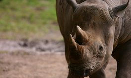 Article: most poached animals world environment day