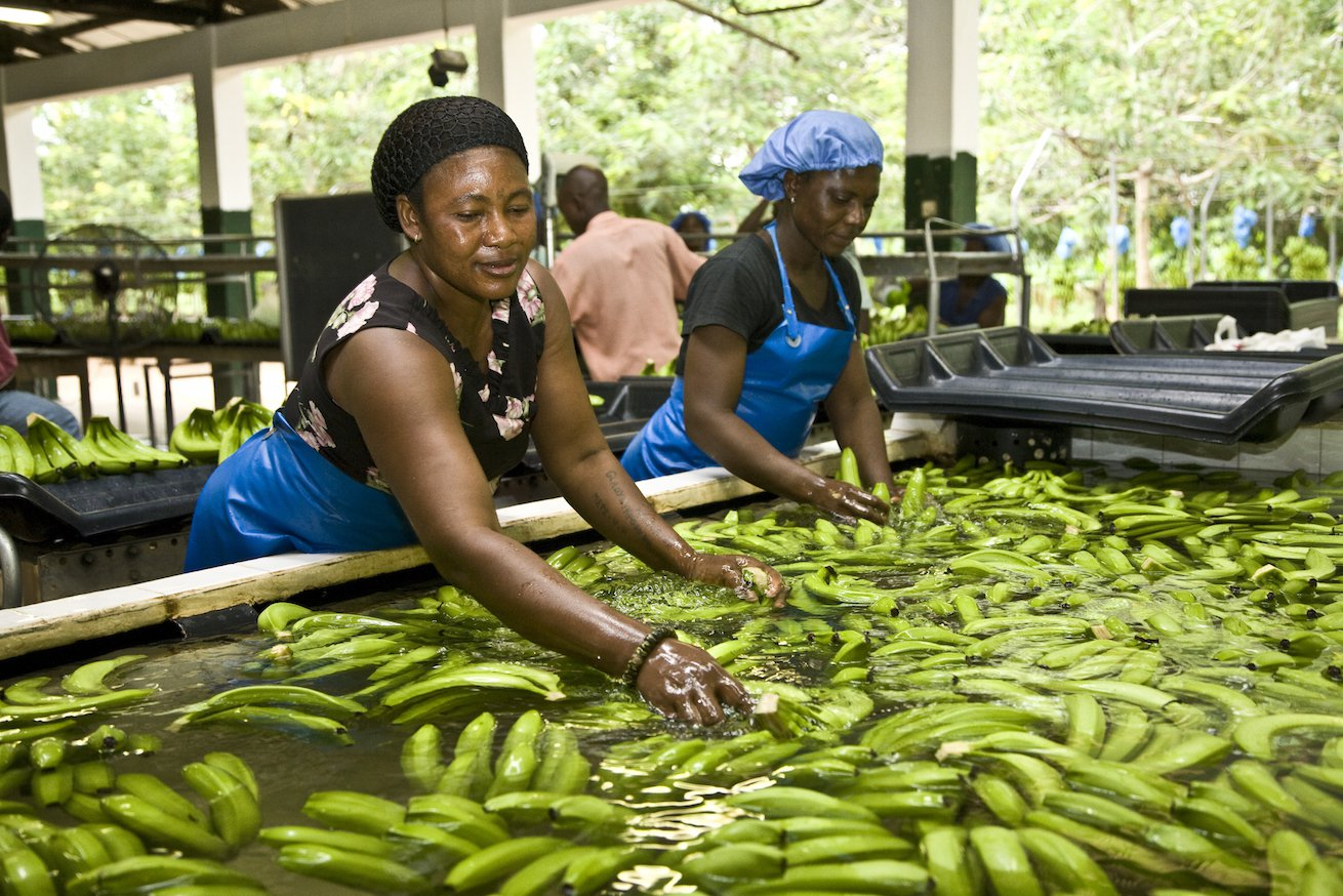 fairtrade_bananas__©Nathalie Bertrams.jpg