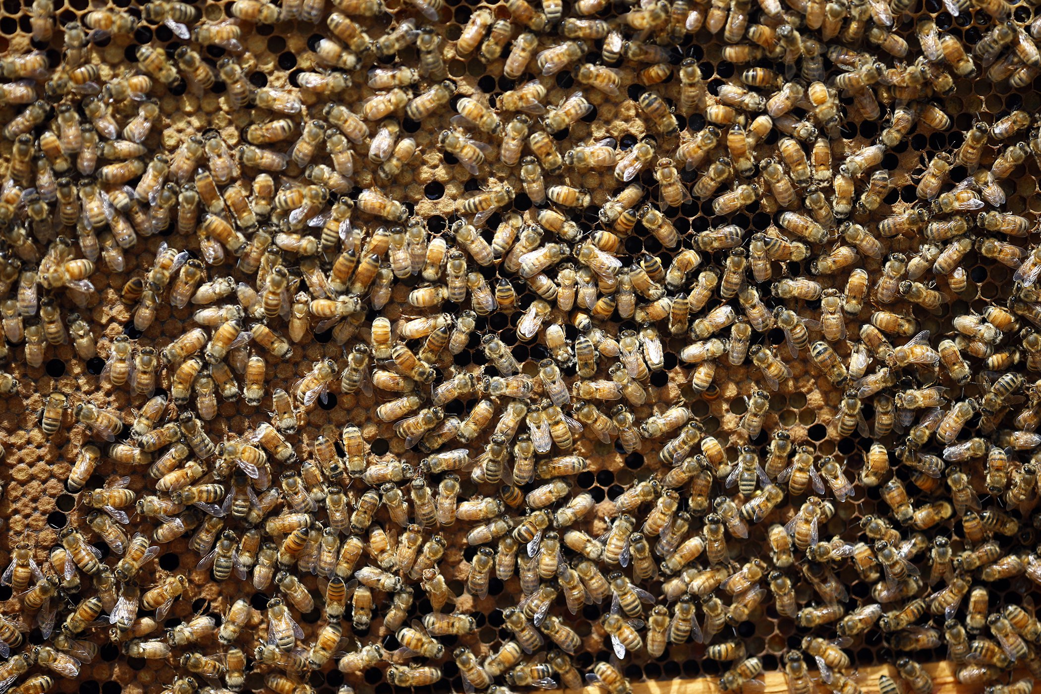 International-Bee-Day-2019.jpg
